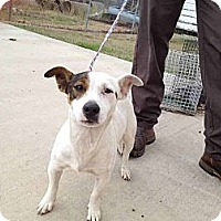 Adopt A Pet :: Wharton in Houston - Houston, TX