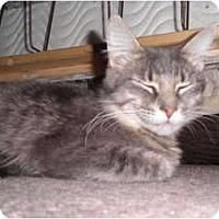 Adopt A Pet :: Windy - Warren, MI