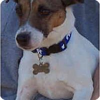 Adopt A Pet :: JETER DEAN - Phoenix, AZ