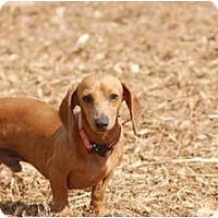 Adopt A Pet :: Aiden - Ft. Myers, FL