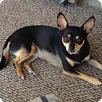 Adopt A Pet :: Izzy - Seattle, WA