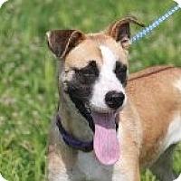 Adopt A Pet :: Millie - Russellville, KY