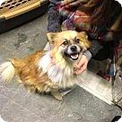 Adopt A Pet :: Buddy 2