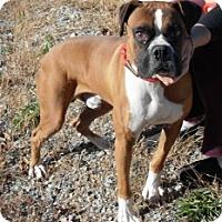 Adopt A Pet :: Dixson - Brentwood, TN
