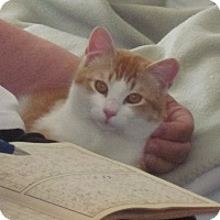 Adopt A Pet :: Sunshine'12 - New York, NY