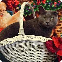 Adopt A Pet :: SCOTTY - New Cumberland, WV