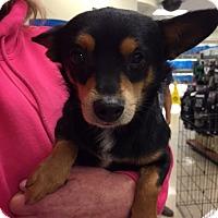 Adopt A Pet :: Mario - Fresno, CA