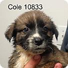 Adopt A Pet :: Cole