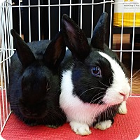 Adopt A Pet :: Chip & Dale - Edmonton, AB