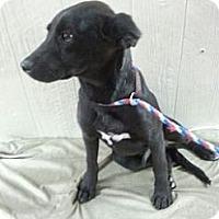 Adopt A Pet :: Harley meet me 5/13 - Manchester, CT