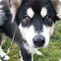 Adopt A Pet :: Angel & Demon - Augusta County, VA
