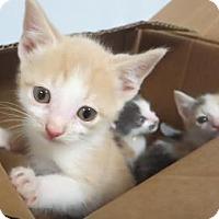 Adopt A Pet :: Leon, Tessa, Britt - Lincolnton, NC