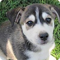 Adopt A Pet :: Annie - Phoenix, AZ