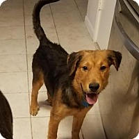Adopt A Pet :: Dude - Houston, TX