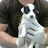 Adopt A Pet :: A278666 - Conroe, TX
