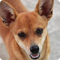Adopt A Pet :: Satchel - Jewett City, CT