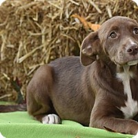 Adopt A Pet :: Hayden - Mechanicsburg, PA