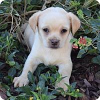 Adopt A Pet :: Claus: Jingle - Palo Alto, CA