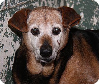 Hound (Unknown Type)/Beagle Mix Dog for adoption in Marietta, Ohio - Susie