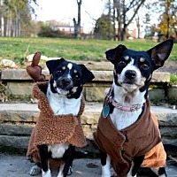 Adopt A Pet :: Eleanor and Itty -BONDED PAIR - Pittsburgh, PA