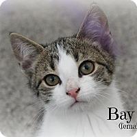 Adopt A Pet :: Bay - Glen Mills, PA