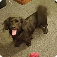 Adopt A Pet :: Covel - Orange Park, FL