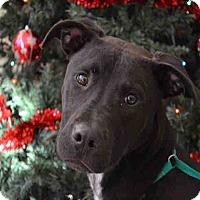 Adopt A Pet :: A076974 - Overland Park, KS