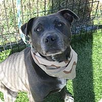 Adopt A Pet :: Prince - Cumming, GA