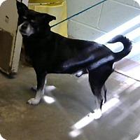Adopt A Pet :: Nyles - Decatur, GA