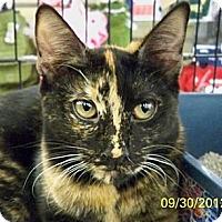 Adopt A Pet :: Kayla Roo - Sacramento, CA