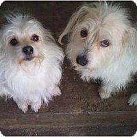 Adopt A Pet :: MILI - Houston, TX