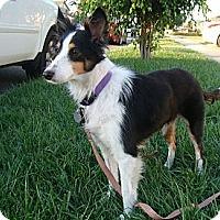 Adopt A Pet :: Becca - La Habra, CA