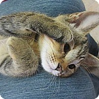 Adopt A Pet :: Coricopat - Mobile, AL