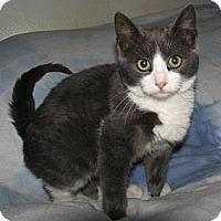 Adopt A Pet :: Hans - Norwich, NY