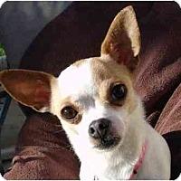 Adopt A Pet :: Dottie - San Francisco, CA