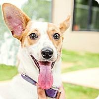 Adopt A Pet :: Buttercup - Gadsden, AL