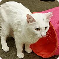 Adopt A Pet :: Snow White - Phoenix, AZ