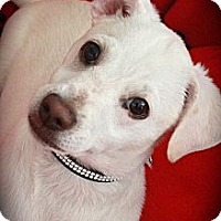 Adopt A Pet :: Ace. - san diego, CA