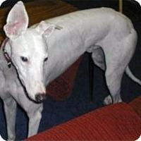 Adopt A Pet :: Camden - Spencerville, MD