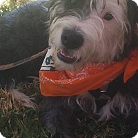 Adopt A Pet :: SPROCKET - Odessa, FL