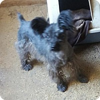Adopt A Pet :: Charlie - Templeton, CA