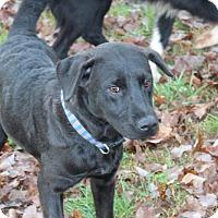 Adopt A Pet :: George - Harmony, Glocester, RI