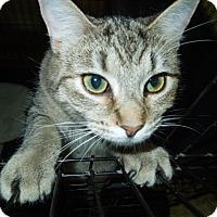 Adopt A Pet :: Suzie Q - Medina, OH