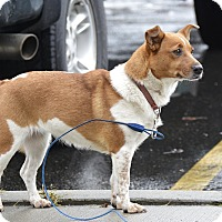 Adopt A Pet :: Waffles - Meridian, ID
