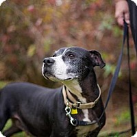 Adopt A Pet :: Suki - Portland, OR