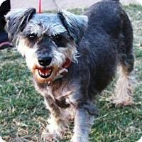 Adopt A Pet :: diva - Gilbert, AZ
