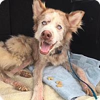 Adopt A Pet :: Rowe - Sugar Land, TX