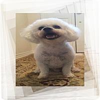 Adopt A Pet :: Buster - FL - Tulsa, OK
