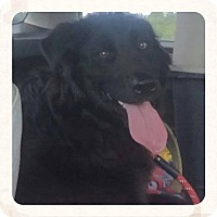 Adopt A Pet :: Wrangler - Bristol, TN