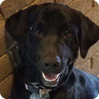 Border Collie Mix Dog for adoption in Phoenix, Arizona - Carson